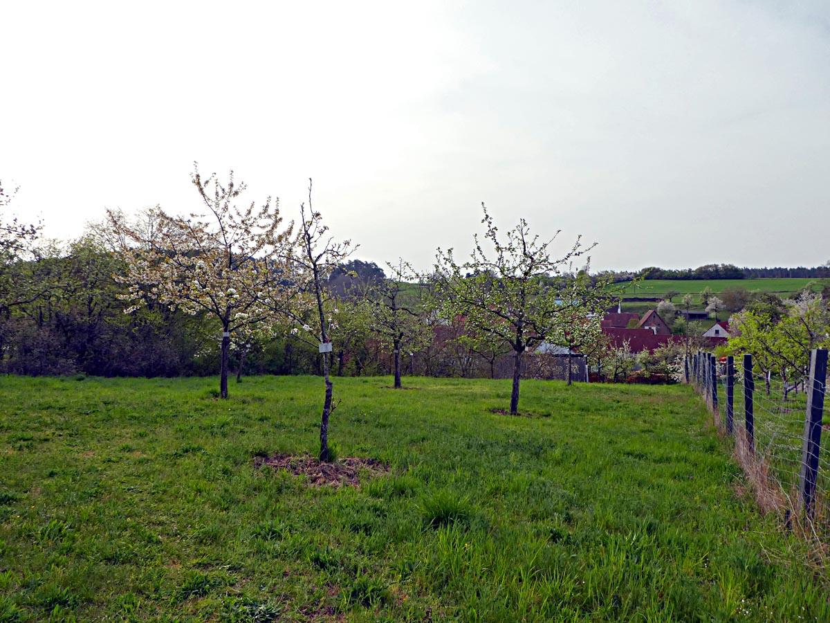 Verein für Gartenbau und Landespflege Flachslanden e V